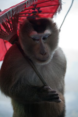 Monkey School de Mae Rim