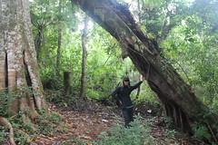 "Pendakian Sakuntala Gunung Argopuro Juni 2014 • <a style=""font-size:0.8em;"" href=""http://www.flickr.com/photos/24767572@N00/26556129954/"" target=""_blank"">View on Flickr</a>"