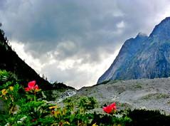 Nature montagnarde