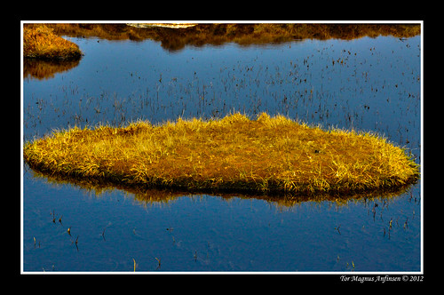 color yellow norway norge gras sotra øygarden (Photo: Tor Magnus Anfinsen on Flickr)