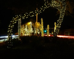 Festival of Lights (8)