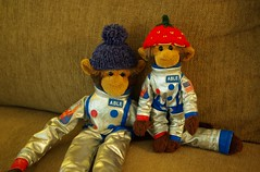 Monkeys in new hats