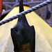 Acro-bat