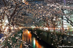 "Sakura_By_Night2 • <a style=""font-size:0.8em;"" href=""http://www.flickr.com/photos/66379360@N02/6900541074/"" target=""_blank"">View on Flickr</a>"