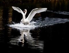 Landing at speed