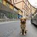 brown street dog 1