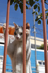Cat in a Cage, Valparaiso by geezaweezer, on Flickr