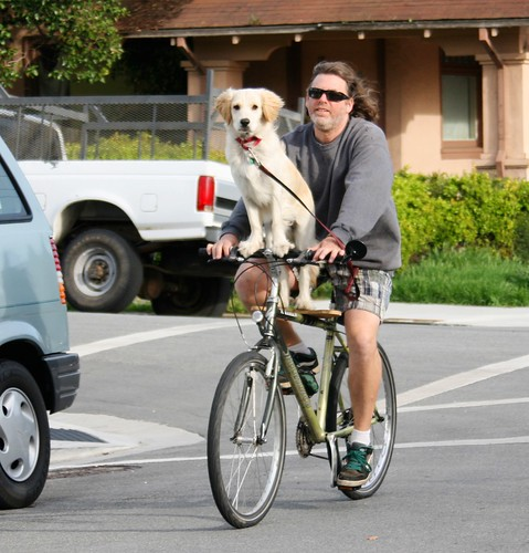 Dog rides a bike by Richard Masoner / Cyclelicious, on Flickr