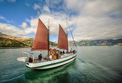Sailing Away to Akaroa