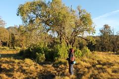 "Pendakian Sakuntala Gunung Argopuro Juni 2014 • <a style=""font-size:0.8em;"" href=""http://www.flickr.com/photos/24767572@N00/26555462804/"" target=""_blank"">View on Flickr</a>"