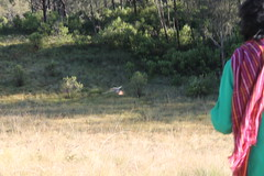 "Pendakian Sakuntala Gunung Argopuro Juni 2014 • <a style=""font-size:0.8em;"" href=""http://www.flickr.com/photos/24767572@N00/26555343954/"" target=""_blank"">View on Flickr</a>"