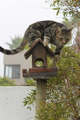 Cat hunting for birds