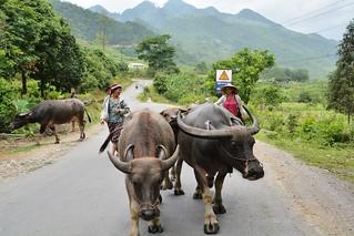 ha giang - vietnam 25