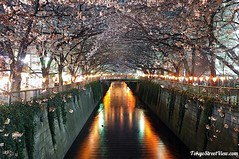 "Sakura_By_Night4 • <a style=""font-size:0.8em;"" href=""http://www.flickr.com/photos/66379360@N02/6900541270/"" target=""_blank"">View on Flickr</a>"