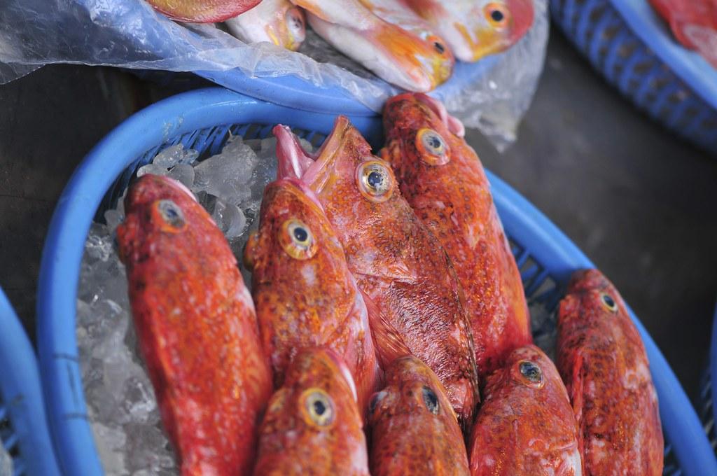 fishing port Daxi 50