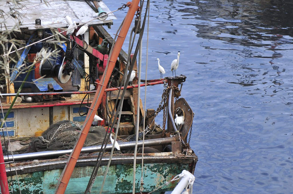 fishing port Daxi 99