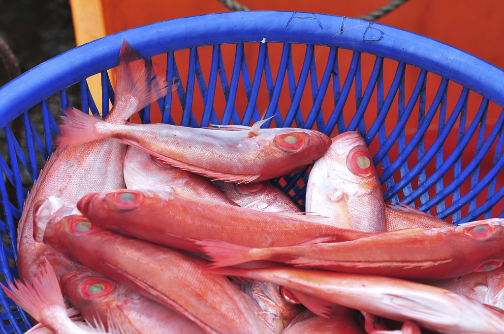 fishing port Daxi 54