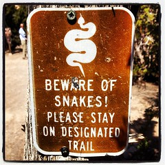 Rattlesnakes! (Cochiti Pueblo, NM)