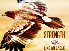 Strength to Fly Like An Eagle