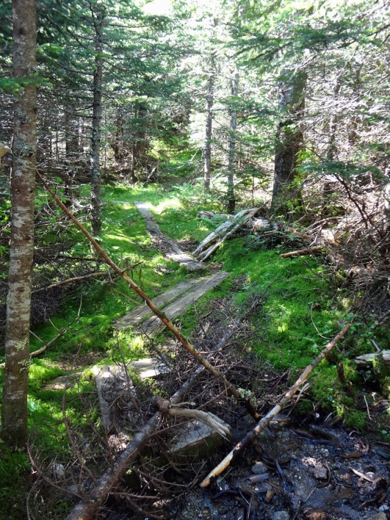 Wright Trail North Branch Closure