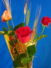 Día del libro y la Rosa (48)
