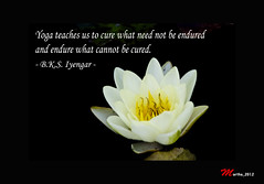 One of my favorite quote by B.K.S. Iyengar ( a...