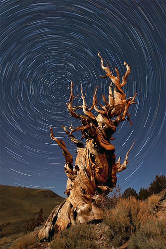 california nightphotography moonlight startrails bristleconepine easternsierra stephenoachscom apertureacademycom