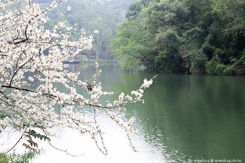後慈湖 (32)