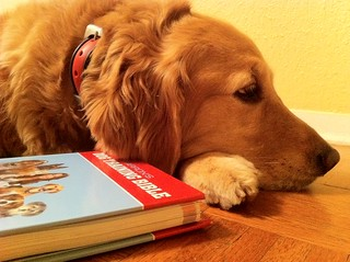 Golden Resting With Barron's Dog Training Bibl...