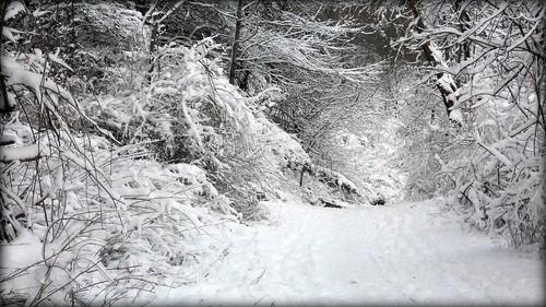 A path through the winter snow