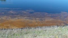 Algal bloom on the dam