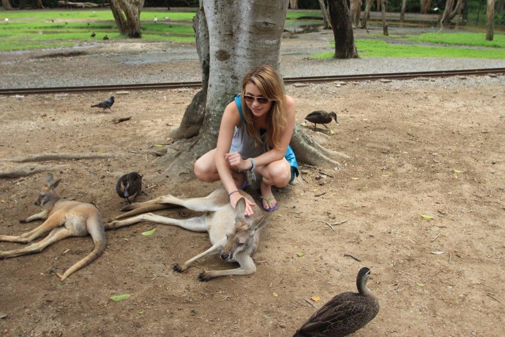 Currumbin Wildlife Sanctuary - Australia