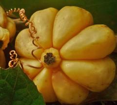 Garcinia Cambogia, Malaber Tamarind