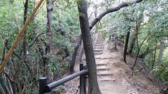 獅子ヶ谷市民の森(寺の上通り)(Teranoue Ave., Shishigaya Community Woods)