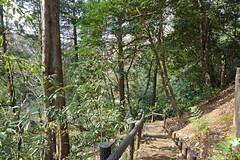 獅子ヶ谷市民の森(新池通り)(Shin-ike Ave., Shishigaya Community Woods)