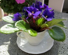 Teacup Violets  - Lisa Greene, AAF, AIFD, PFCI