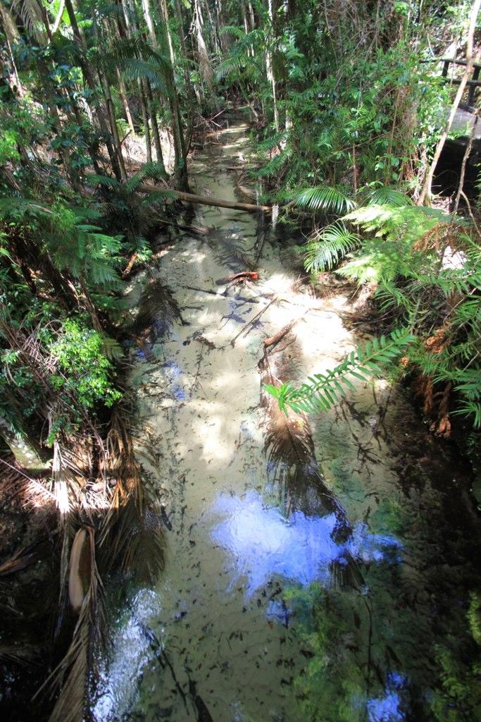 Rainforest - Fraser Island, Australia
