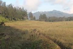 "Pendakian Sakuntala Gunung Argopuro Juni 2014 • <a style=""font-size:0.8em;"" href=""http://www.flickr.com/photos/24767572@N00/26557276343/"" target=""_blank"">View on Flickr</a>"