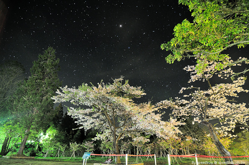 阿里山櫻花季2