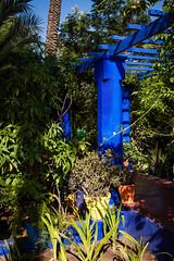 Marrakech - Jardins de Majorelle