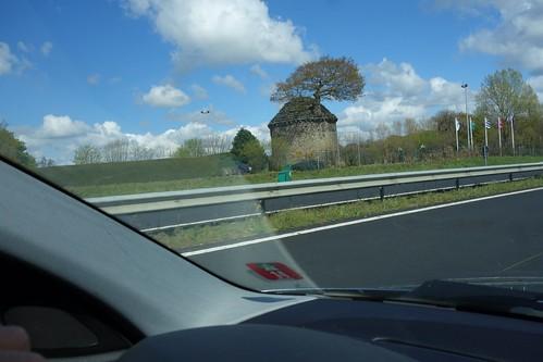 Un arbre pousse dans un pigeonnier sur le bord de route.