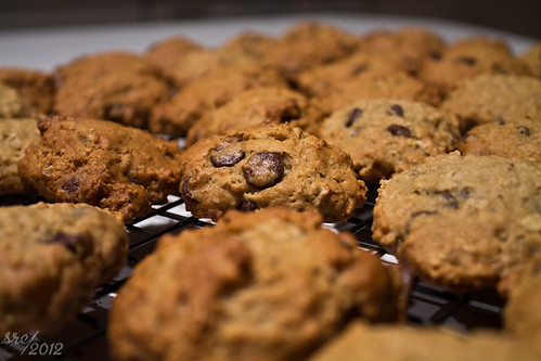"""May 15 -- Chocolate Chip • <a style=""""font-size:0.8em;"""" href=""""http://www.flickr.com/photos/7983687@N06/7207179402/"""" target=""""_blank"""">View on Flickr</a>"""
