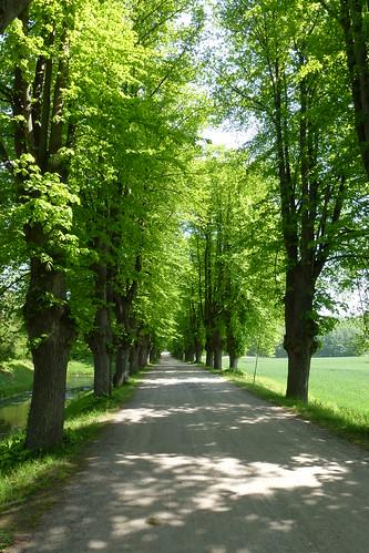 Wismar maj 2012075