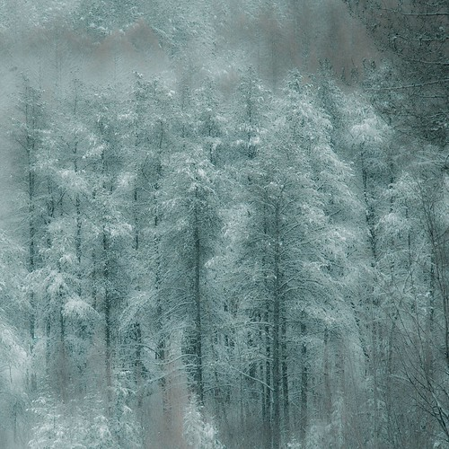 After The Snowstorm In The Forest...!!!