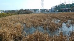 二ッ池(神奈川県横浜市鶴見区)(Pond of two, Yokohama, Japan)