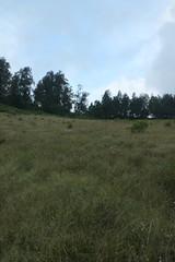 "Pendakian Sakuntala Gunung Argopuro Juni 2014 • <a style=""font-size:0.8em;"" href=""http://www.flickr.com/photos/24767572@N00/27128469586/"" target=""_blank"">View on Flickr</a>"