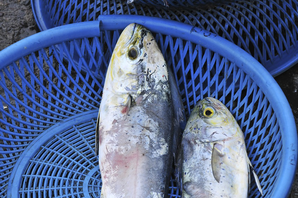 fishing port Daxi 32