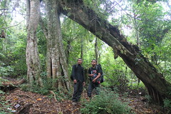 "Pendakian Sakuntala Gunung Argopuro Juni 2014 • <a style=""font-size:0.8em;"" href=""http://www.flickr.com/photos/24767572@N00/26557706533/"" target=""_blank"">View on Flickr</a>"