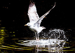 Splashy take-off