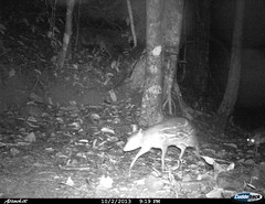 """mousedeer7 BK-23 • <a style=""""font-size:0.8em;"""" href=""""http://www.flickr.com/photos/109145777@N03/13794566633/"""" target=""""_blank"""">View on Flickr</a>"""